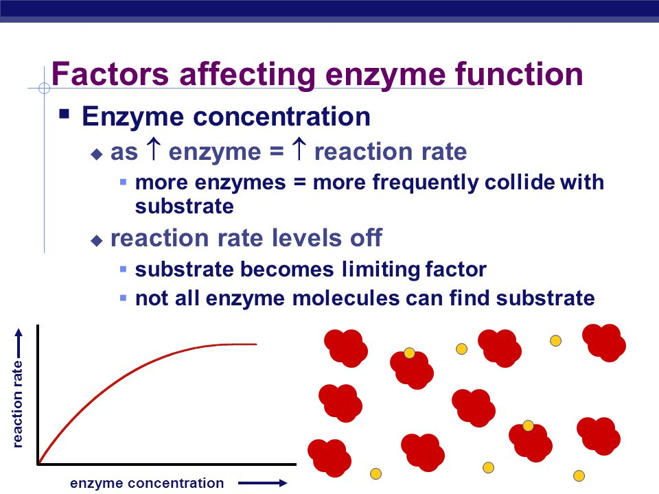 Enzyme concentration enzyme concentration reaction rate What's happening here !