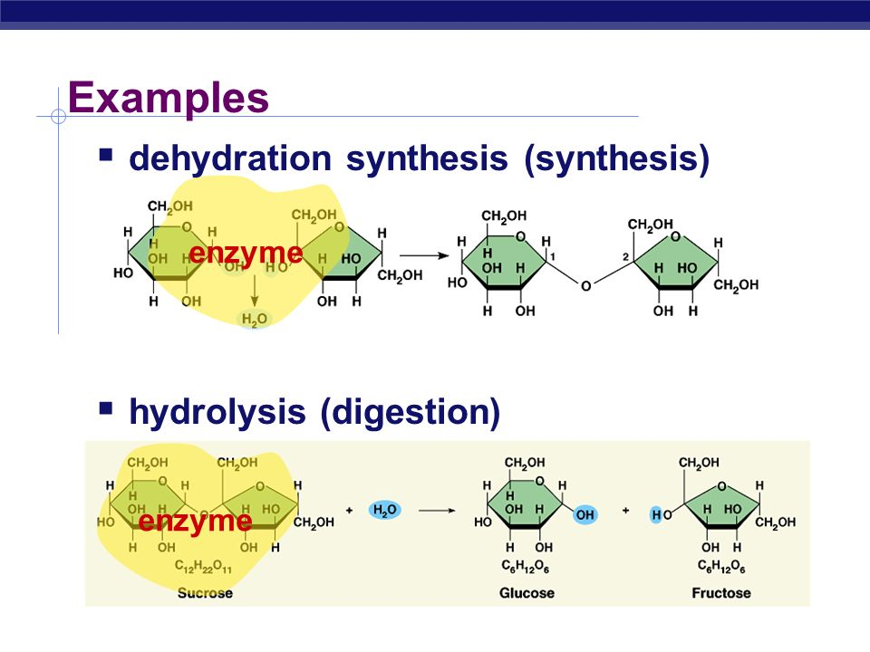 Examples  dehydration synthesis (synthesis)  hydrolysis (digestion) + H2OH2O + H2OH2O enzyme