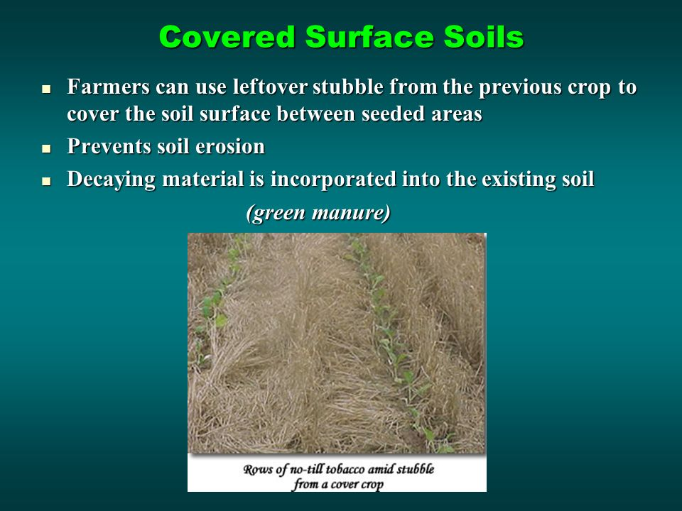 Covered Surface Soils Farmers can use leftover stubble from the previous crop to cover the soil surface between seeded areas Farmers can use leftover stubble from the previous crop to cover the soil surface between seeded areas Prevents soil erosion Prevents soil erosion Decaying material is incorporated into the existing soil Decaying material is incorporated into the existing soil (green manure)