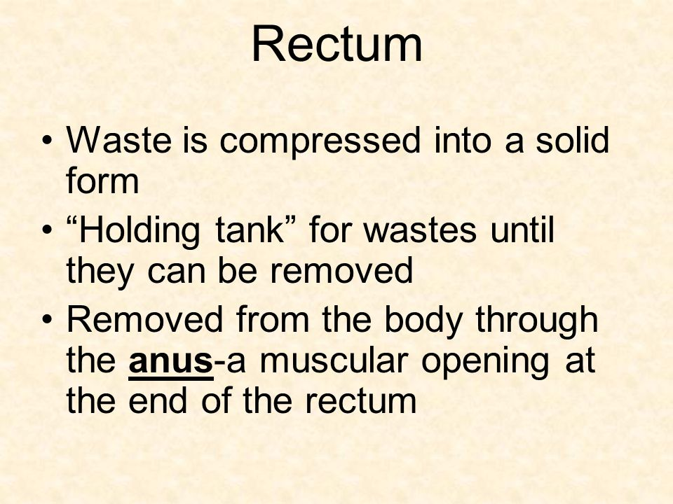 Rectum Waste is compressed into a solid form Holding tank for wastes until they can be removed Removed from the body through the anus-a muscular opening at the end of the rectum