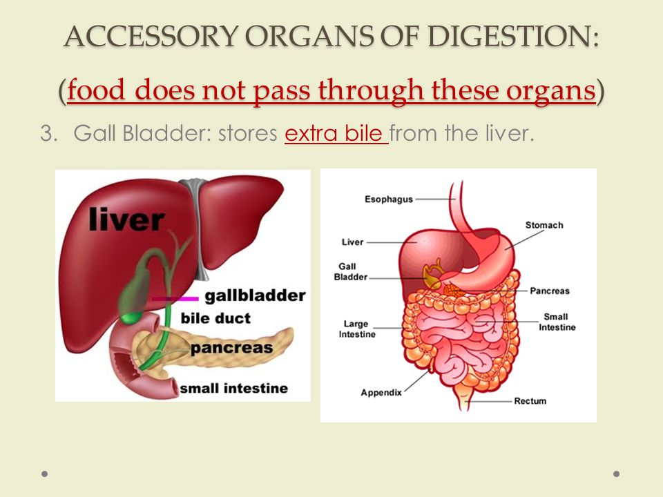 Which Of The Following Is An Accessory Organ Of Digestion Extraordinary Digestive System Chapter 60 Section 60 Types Of Digestion 60CHEMICAL