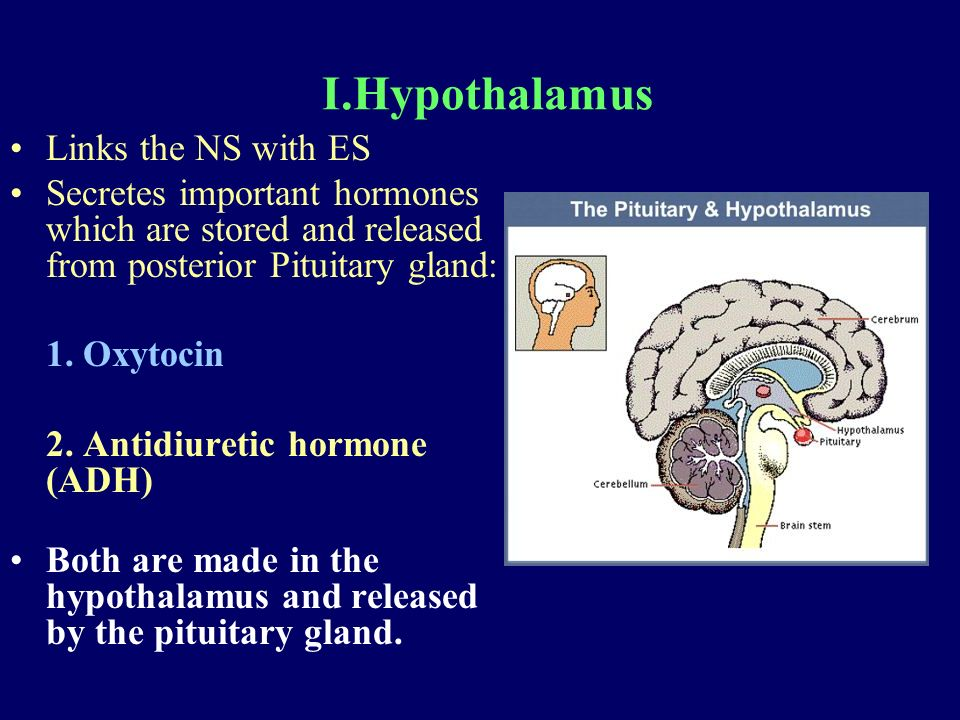 I.Hypothalamus Links the NS with ES Secretes important hormones which are stored and released from posterior Pituitary gland: 1.