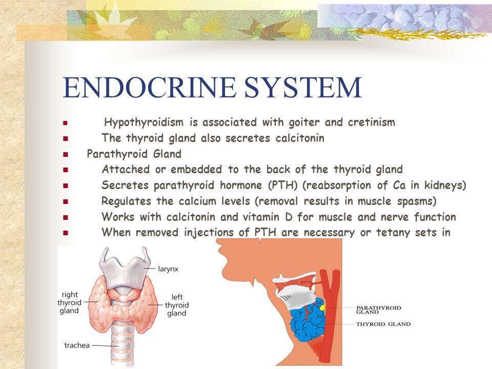 Endocrine Glands Endocrine Glands Secrete Hormones Into The