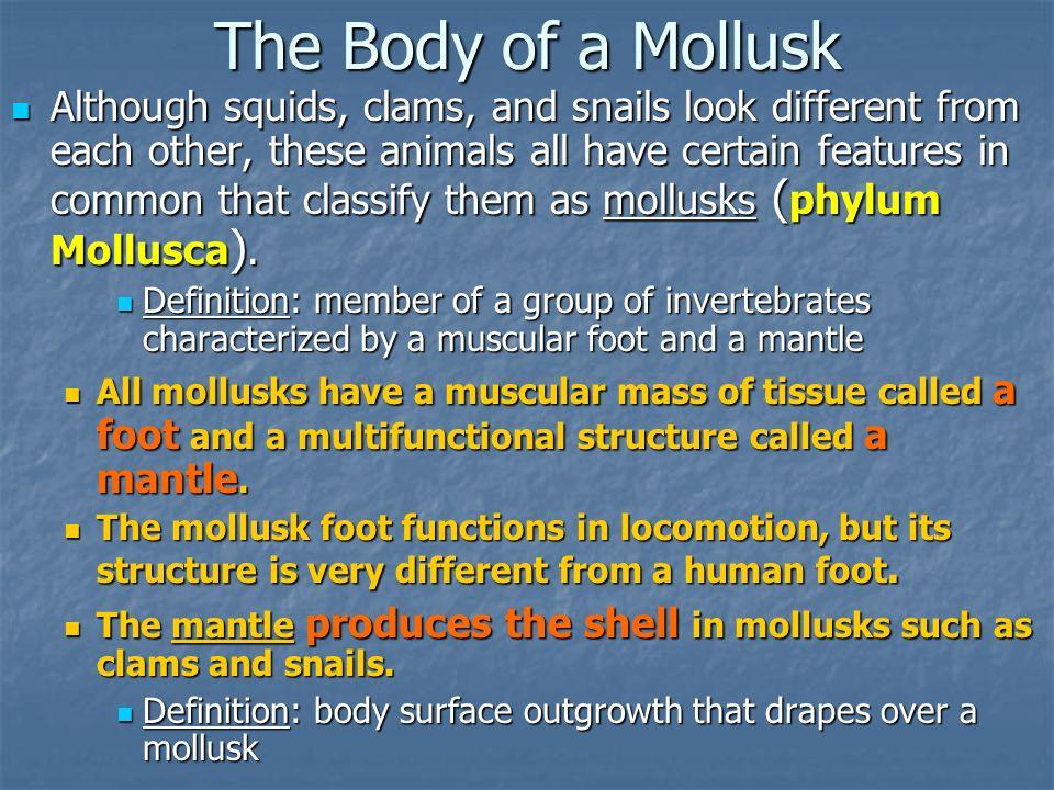key features of invertebrates