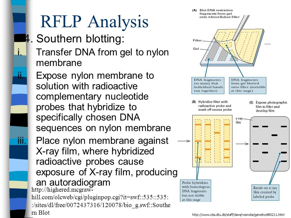 RFLP Analysis 4.