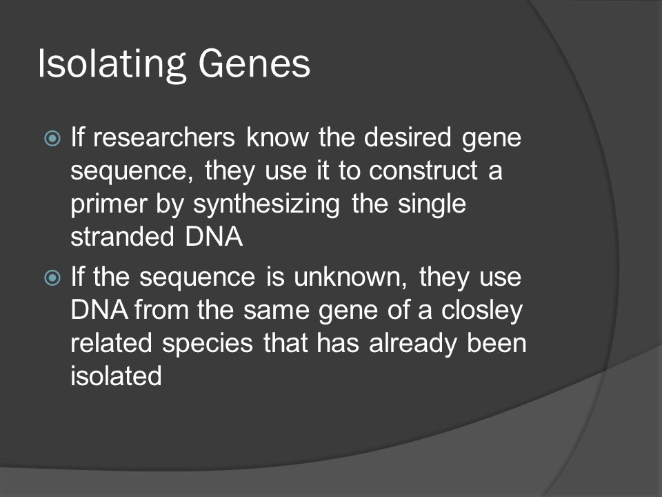Isolating Genes  If researchers know the desired gene sequence, they use it to construct a primer by synthesizing the single stranded DNA  If the sequence is unknown, they use DNA from the same gene of a closley related species that has already been isolated