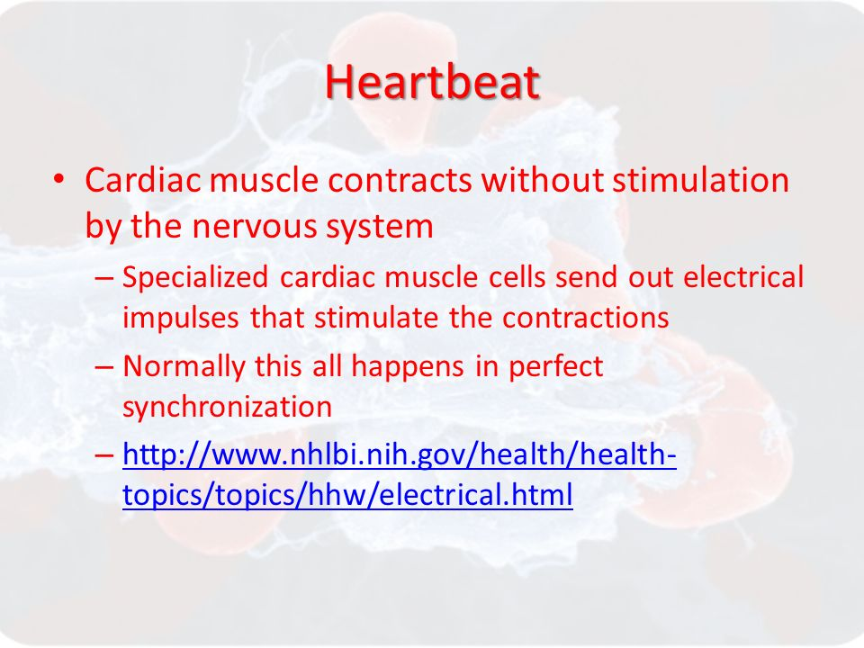 Heartbeat Cardiac muscle contracts without stimulation by the nervous system – Specialized cardiac muscle cells send out electrical impulses that stimulate the contractions – Normally this all happens in perfect synchronization –   topics/topics/hhw/electrical.html   topics/topics/hhw/electrical.html