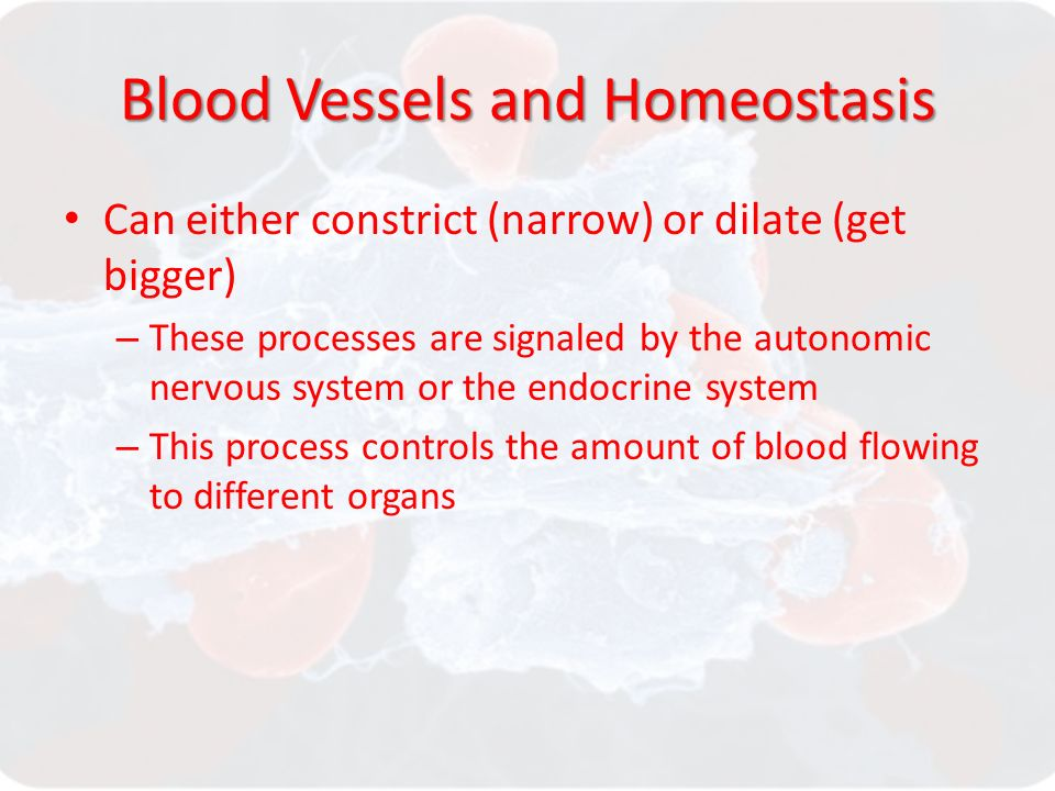 Blood Vessels and Homeostasis Can either constrict (narrow) or dilate (get bigger) – These processes are signaled by the autonomic nervous system or the endocrine system – This process controls the amount of blood flowing to different organs