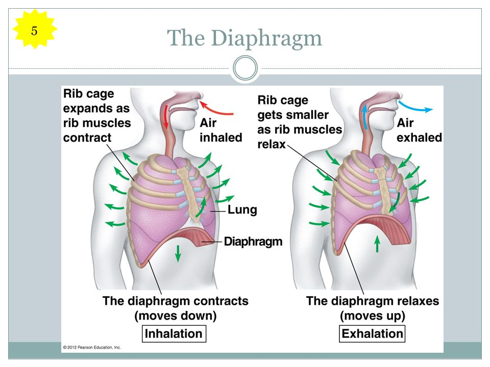The Diaphragm 5
