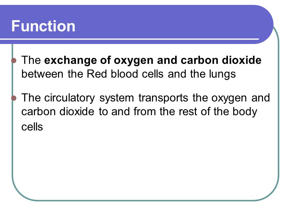 Function The exchange of oxygen and carbon dioxide between the Red blood cells and the lungs The circulatory system transports the oxygen and carbon dioxide to and from the rest of the body cells