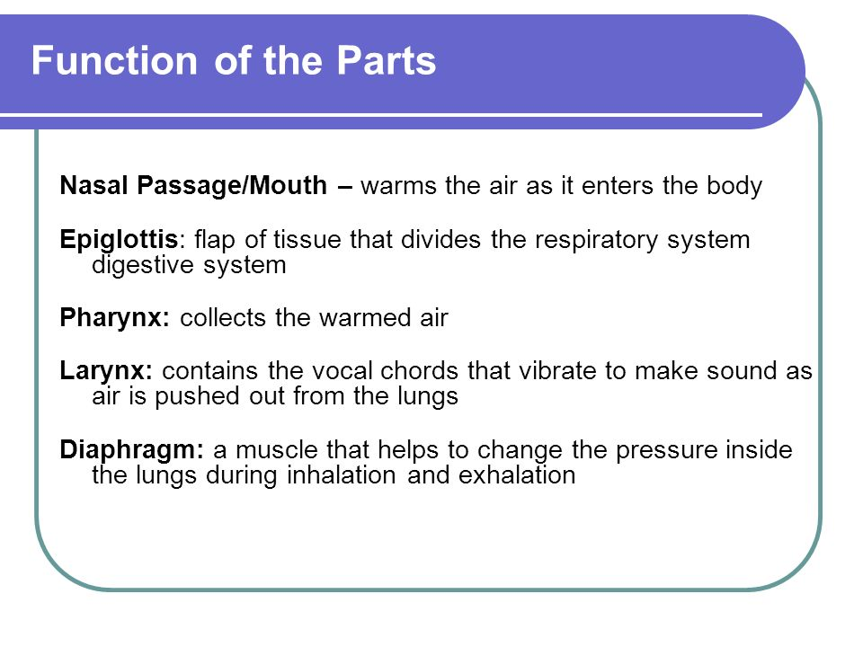 Function of the Parts Nasal Passage/Mouth – warms the air as it enters the body Epiglottis: flap of tissue that divides the respiratory system digestive system Pharynx: collects the warmed air Larynx: contains the vocal chords that vibrate to make sound as air is pushed out from the lungs Diaphragm: a muscle that helps to change the pressure inside the lungs during inhalation and exhalation