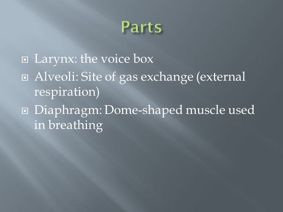  Larynx: the voice box  Alveoli: Site of gas exchange (external respiration)  Diaphragm: Dome-shaped muscle used in breathing