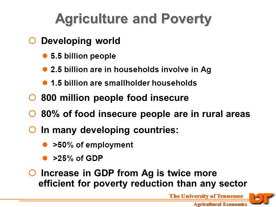 Agriculture and Poverty  Developing world 5.5 billion people 2.5 billion are in households involve in Ag 1.5 billion are smallholder households  800 million people food insecure  80% of food insecure people are in rural areas  In many developing countries: >50% of employment >25% of GDP  Increase in GDP from Ag is twice more efficient for poverty reduction than any sector