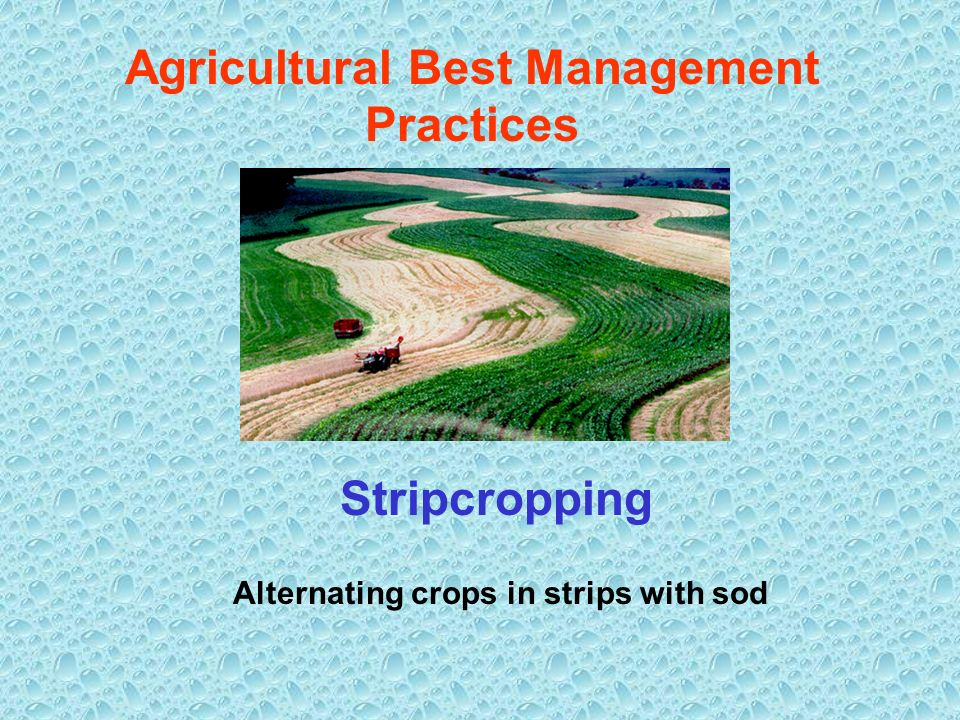 Agricultural Best Management Practices Stripcropping Alternating crops in strips with sod