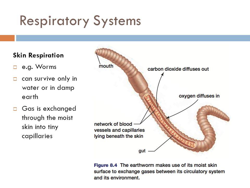 Earthworm Breathing Diagram - Illustration Of Wiring Diagram •