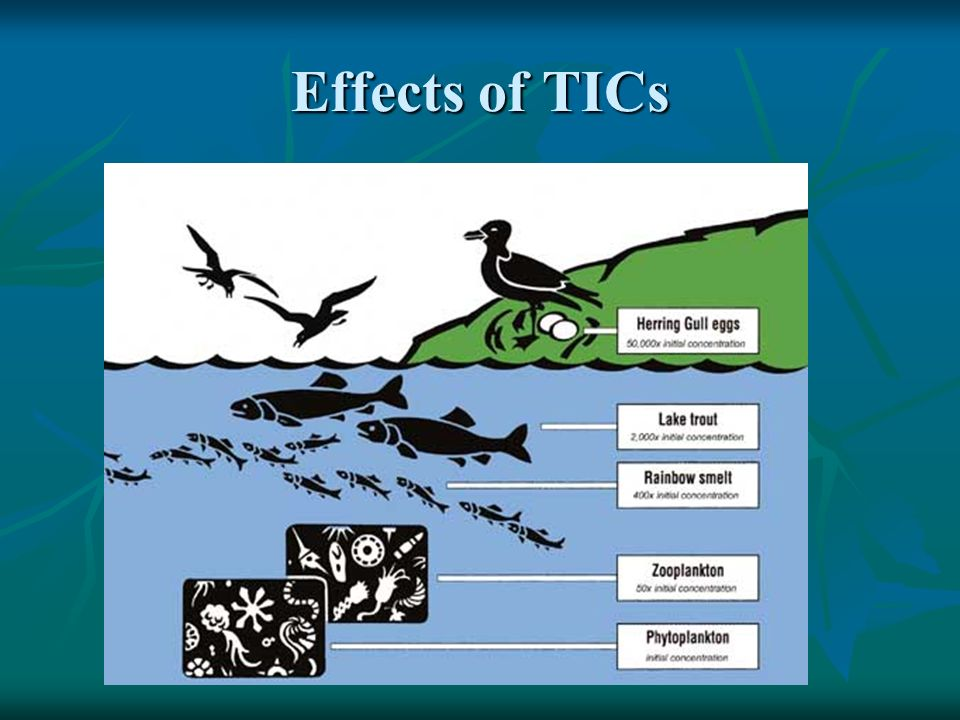 Effects of TICs
