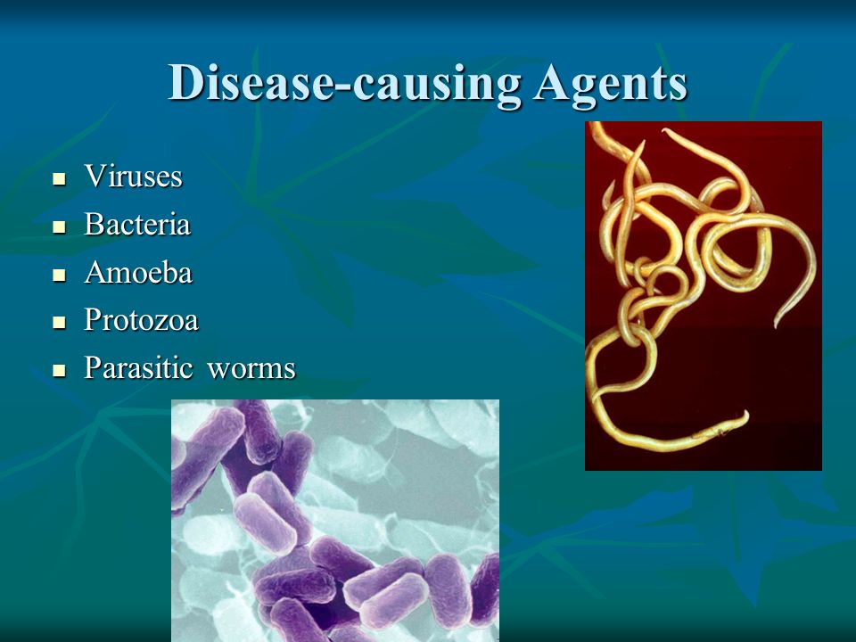 Disease-causing Agents Viruses Viruses Bacteria Bacteria Amoeba Amoeba Protozoa Protozoa Parasitic worms Parasitic worms