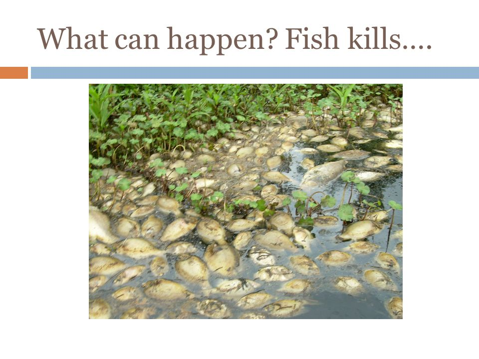 What can happen Fish kills….