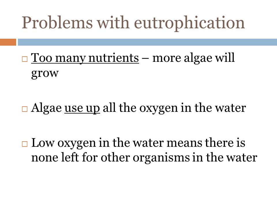Problems with eutrophication  Too many nutrients – more algae will grow  Algae use up all the oxygen in the water  Low oxygen in the water means there is none left for other organisms in the water