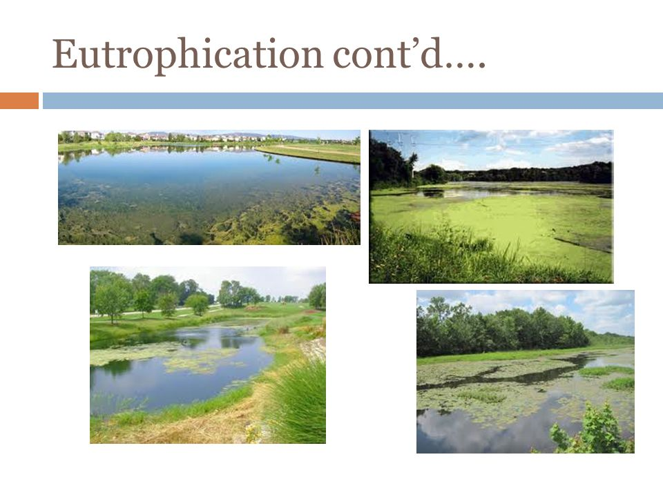 Eutrophication cont'd….