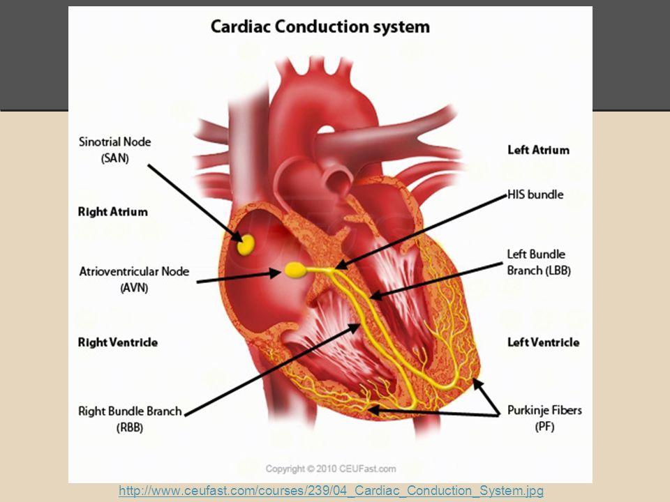 Electrical Activity Of Heart Presentation By Tarique Ahmad John