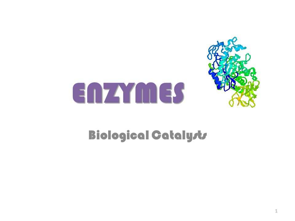 ENZYMES Biological Catalysts 1