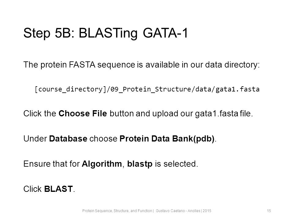 Step 5B: BLASTing GATA-1 The protein FASTA sequence is available in our data directory: [course_directory]/09_Protein_Structure/data/gata1.fasta Click the Choose File button and upload our gata1.fasta file.