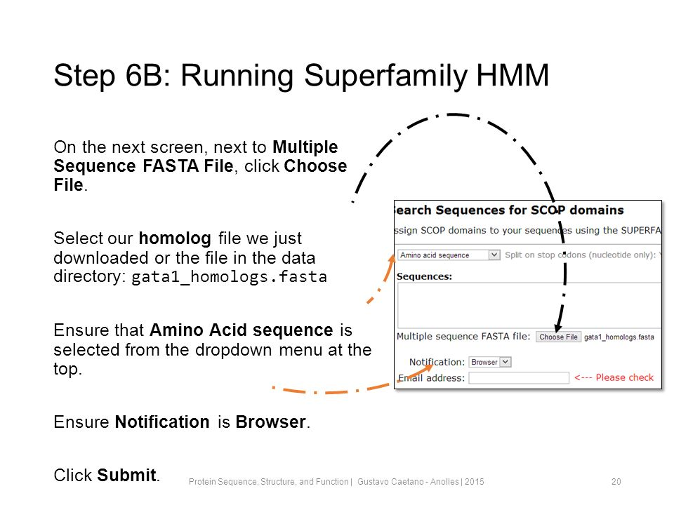 Step 6B: Running Superfamily HMM On the next screen, next to Multiple Sequence FASTA File, click Choose File.
