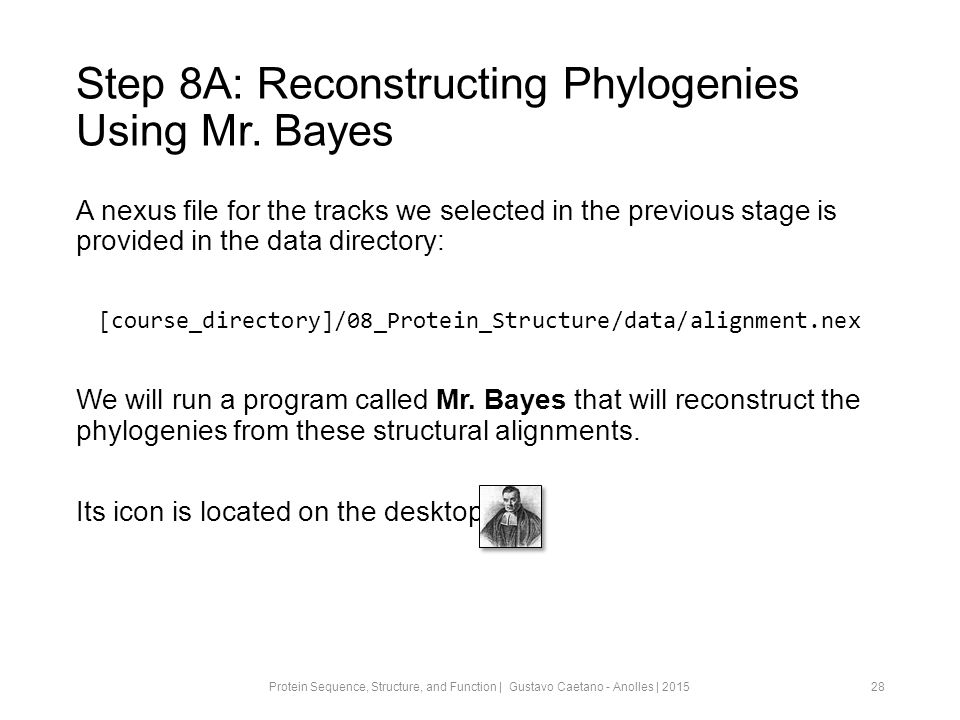 Step 8A: Reconstructing Phylogenies Using Mr.