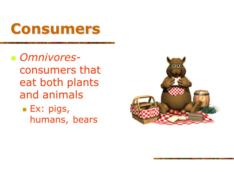 Consumers Tertiary (higher- level) consumer Feed only on other carnivores Wolf