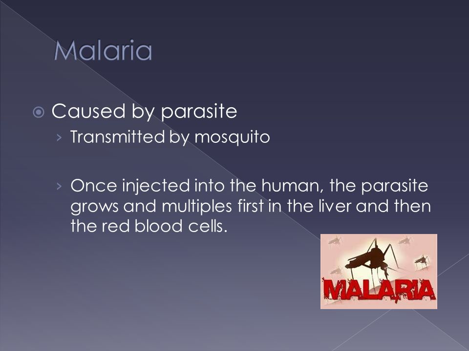 Caused by parasite › Transmitted by mosquito › Once injected into