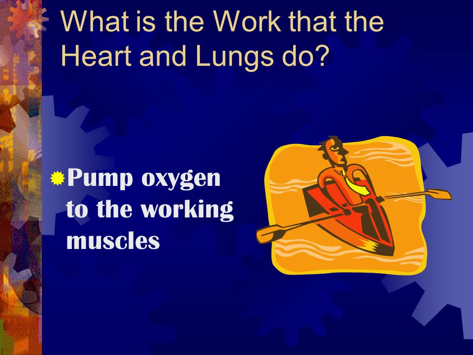 What is the Work that the Heart and Lungs do  Pump oxygen to the working muscles