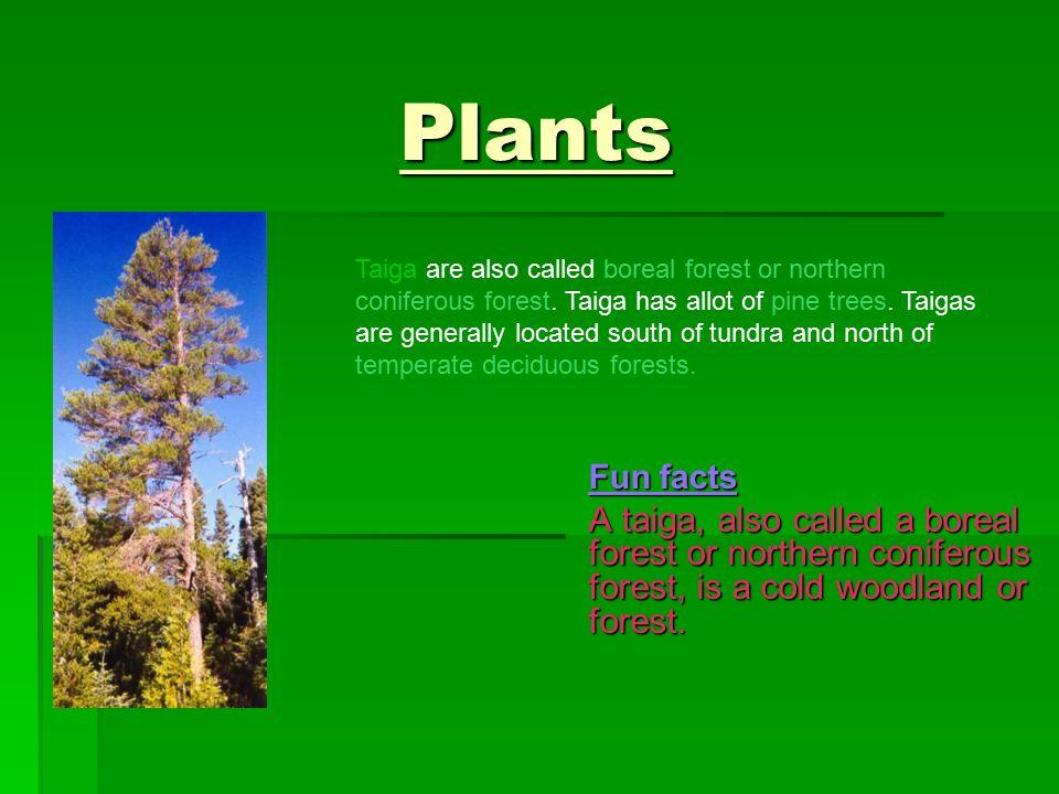 2 Plants Fun Facts