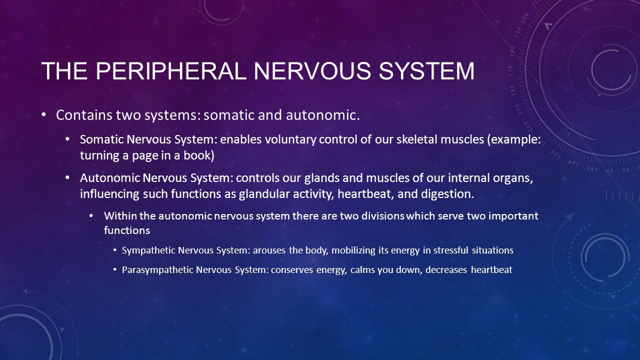 THE PERIPHERAL NERVOUS SYSTEM Contains two systems: somatic and autonomic.