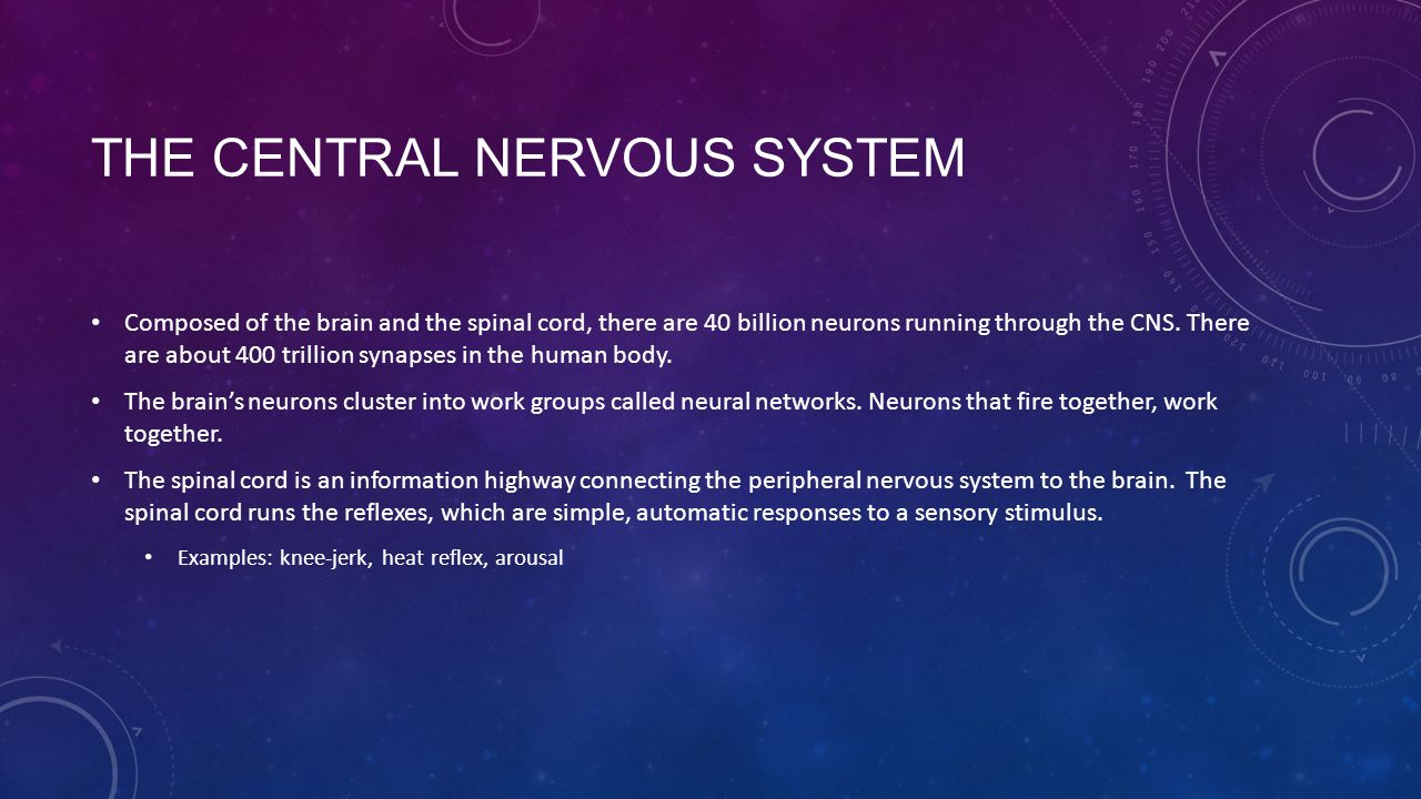 THE CENTRAL NERVOUS SYSTEM Composed of the brain and the spinal cord, there are 40 billion neurons running through the CNS.