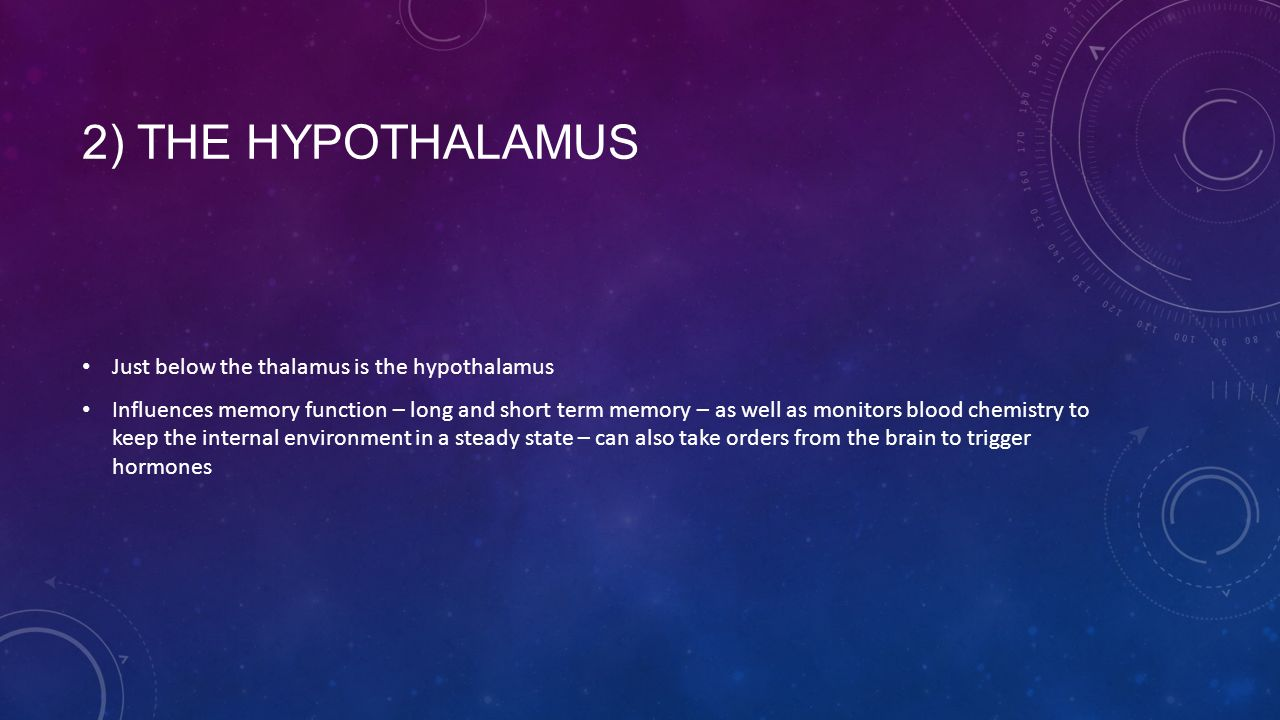 2) THE HYPOTHALAMUS Just below the thalamus is the hypothalamus Influences memory function – long and short term memory – as well as monitors blood chemistry to keep the internal environment in a steady state – can also take orders from the brain to trigger hormones