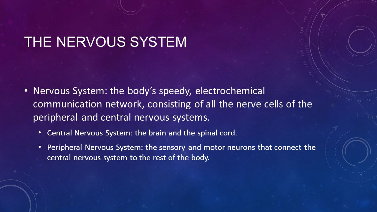 THE NERVOUS SYSTEM Nervous System: the body's speedy, electrochemical communication network, consisting of all the nerve cells of the peripheral and central nervous systems.
