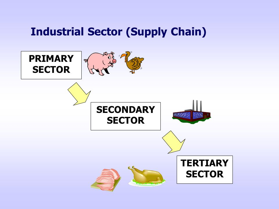 Industrial Sector (Supply Chain) PRIMARY SECTOR SECONDARY SECTOR TERTIARY SECTOR
