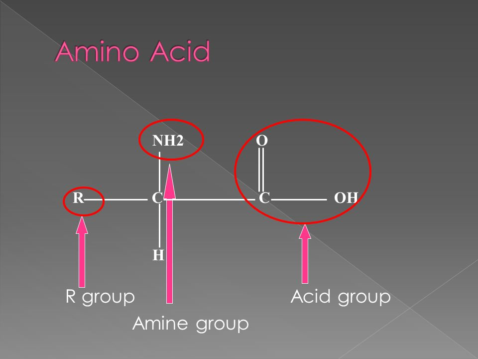 The Elements C H O N Make Up Amino Acids Aa