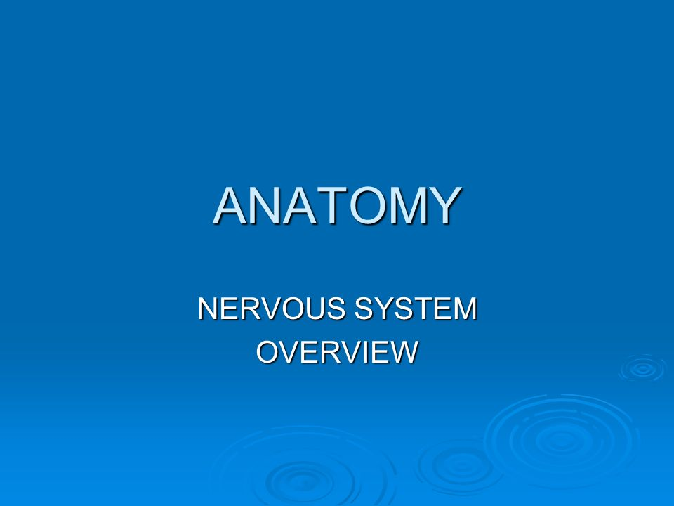 ANATOMY NERVOUS SYSTEM OVERVIEW