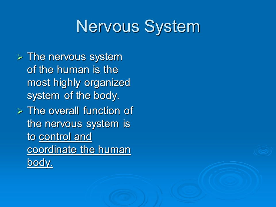 Nervous System  The nervous system of the human is the most highly organized system of the body.
