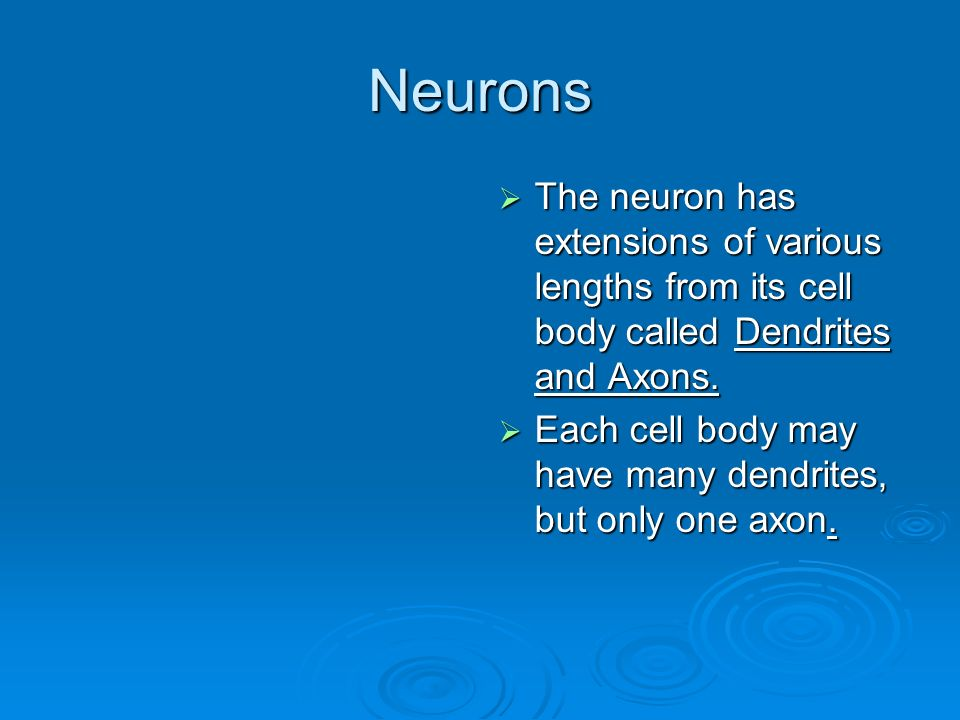 Neurons  The neuron has extensions of various lengths from its cell body called Dendrites and Axons.