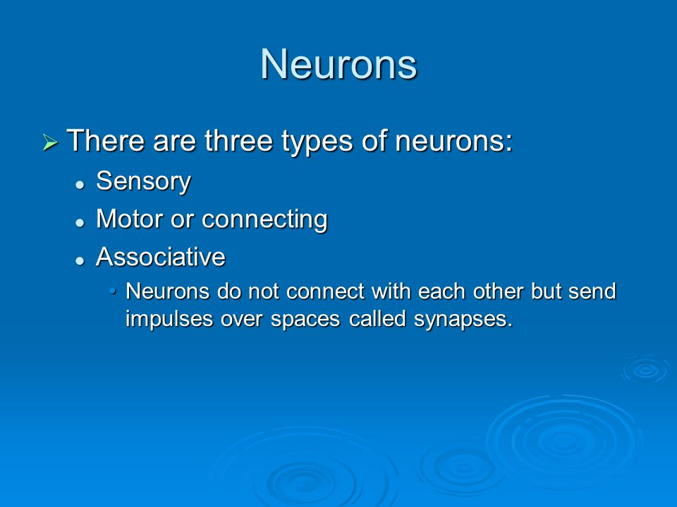 Neurons  There are three types of neurons: Sensory Sensory Motor or connecting Motor or connecting Associative Associative Neurons do not connect with each other but send impulses over spaces called synapses.Neurons do not connect with each other but send impulses over spaces called synapses.