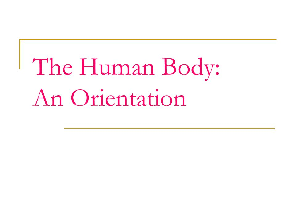 The Human Body An Orientation Anatomy Is The Study Of The Form Or