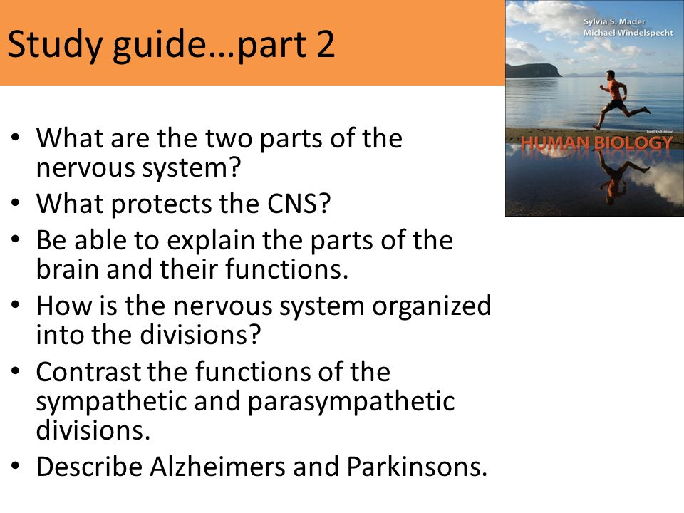Study guide…part 2 What are the two parts of the nervous system.