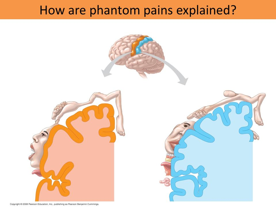 How are phantom pains explained