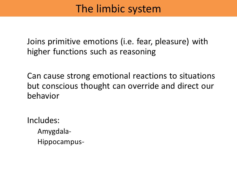 The limbic system Joins primitive emotions (i.e.