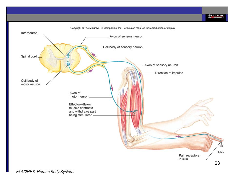 EDU2HBS Human Body Systems 23