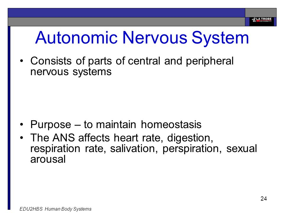 EDU2HBS Human Body Systems 24 Autonomic Nervous System Consists of parts of central and peripheral nervous systems Purpose – to maintain homeostasis The ANS affects heart rate, digestion, respiration rate, salivation, perspiration, sexual arousal