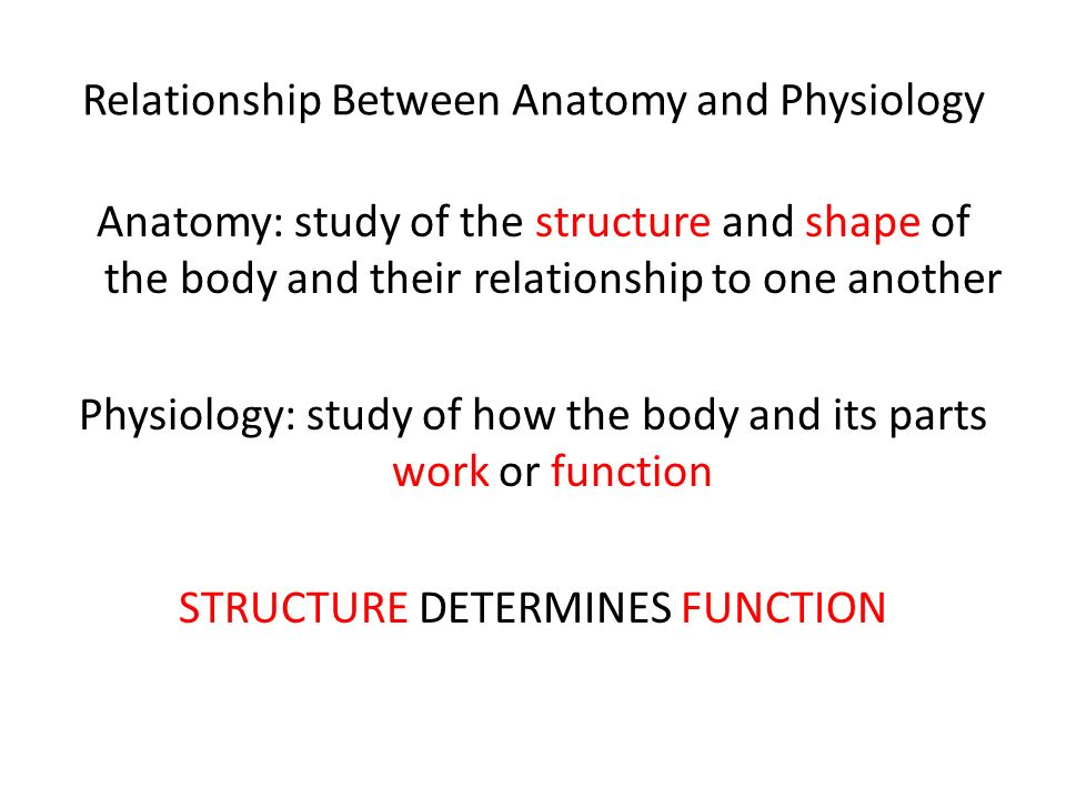 Chapter One Introduction to Anatomy and Physiology. - ppt download